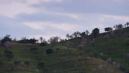 Green field, hilly land with garden orchard trees. Ronda valley, Andalusia landscape in Malaga province, Spain. Imagens