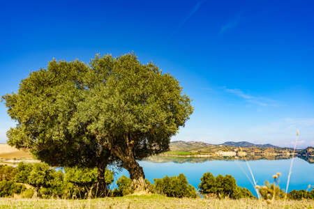 Spanish nature landscape. Embalse del Guadalhorce and surrounding countryside with olive tree. Ardales Reservoir, Malaga Andalusia, Spain
