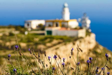 Spring flowers and Mesa Roldan lighthouse, Cabo de Gata Nijar Natural Park in Almeria province, Andalusia Spain. Travel destination.