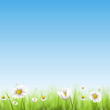 chamomiles: Floral summer background with chamomiles. Illustration