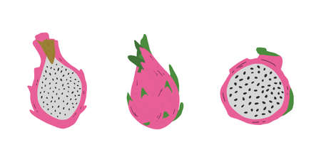 Pink pitayas isolated on white background. Hand drawn pitahaya clip art. Exotic tropical dragon fruit. Vector.