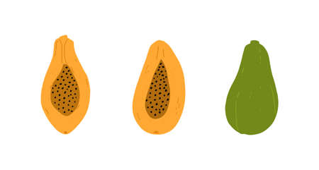 Papaya isolated on white background. Exotic tropical papaya fruit. Hand drawn clip art in cartoon style. Vector.