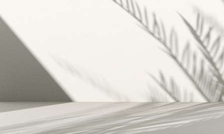 3d rendering. Empty white wall with tree shadows. 3d rendering.