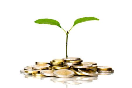 Kleine Pflanze und Euro-Münzen  Standard-Bild