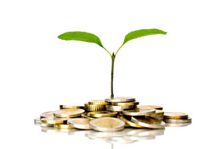 Little plant and euro coins photo