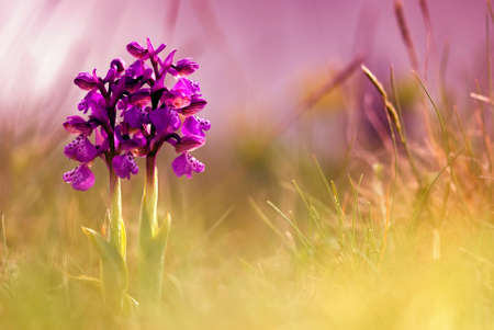 Abstract background with spring flower photo