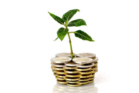 Little plant and euro coins