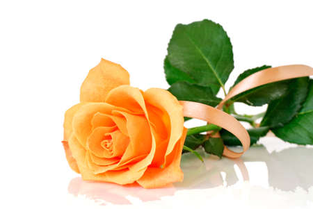 Rose with ribbon Stock Photo