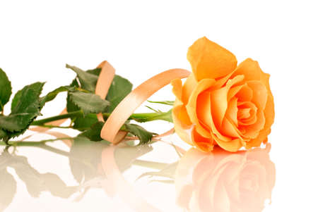 rose isolated: Rose with ribbon Stock Photo