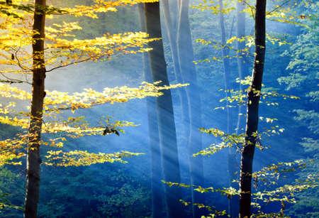 Lichter des Waldes Standard-Bild