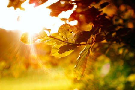 Bunte Blätter mit Sonnenstrahl Standard-Bild