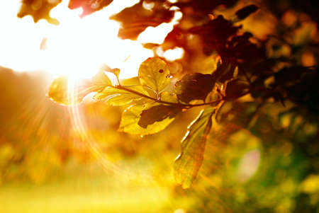 Colorful leaves with sunbeam