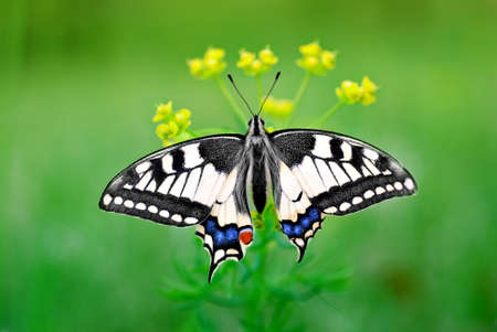 Eastern Tiger Swallowtail Stock Photo - 12924338