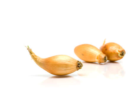 Onions isolated on white background Stock Photo - 14168175