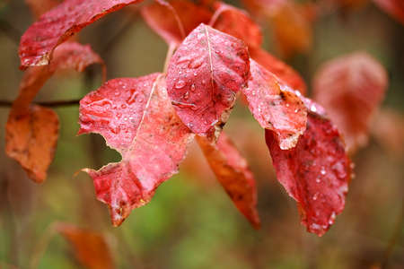 Colorful leaves with water drops