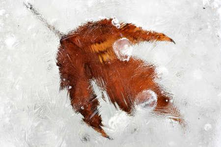 gobble: Frozen leaf Stock Photo