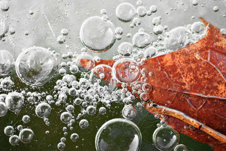 gobble: Leaf in the ice with bubbles