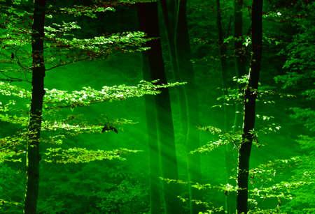 foresta: Luci della foresta Archivio Fotografico
