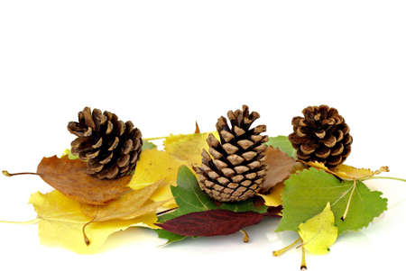 Objects of autumn - colorful leaves and cones photo