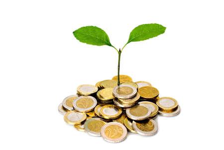 Kleine Pflanze und Euro-Münzen over white