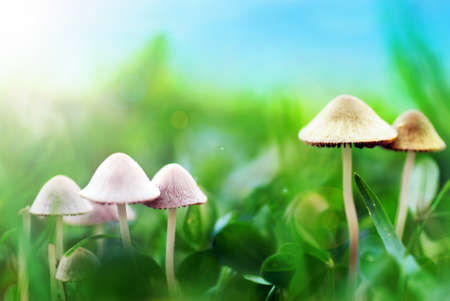 Mushrooms on the meadow Stock Photo - 15600222