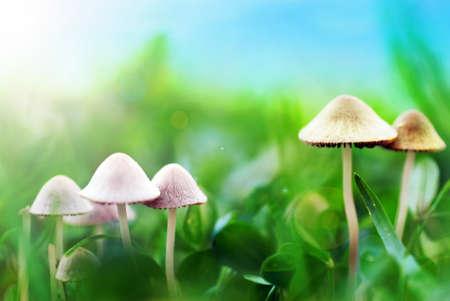 Pilze auf der Wiese