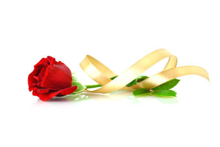 single red rose: Red rose with gold ribbon isolated on white