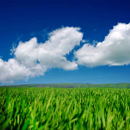 Green field and blue sky Stock Photo - 19142090