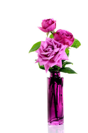 Purple roses in purple glass vase over white photo