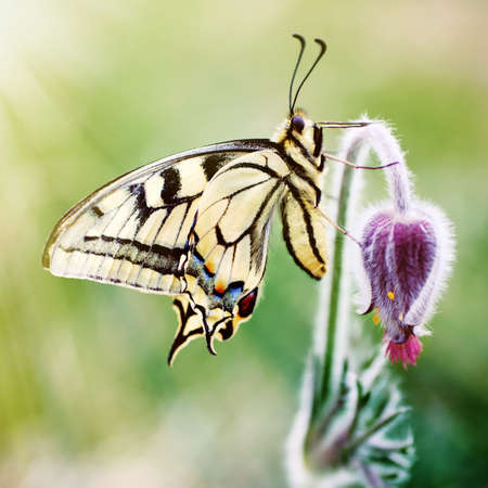 Butterfly on a spring flower photo