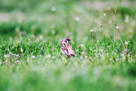 Bird standing in the grass photo