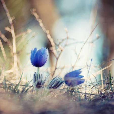 Flowerart photo
