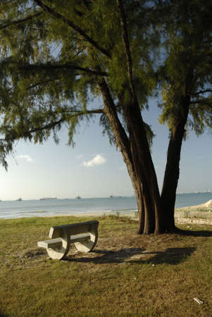 shady: Bench by the beach and tree Stock Photo