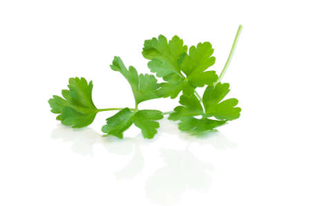 Parsley leaves isolated on white  Stock Photo - 21319998