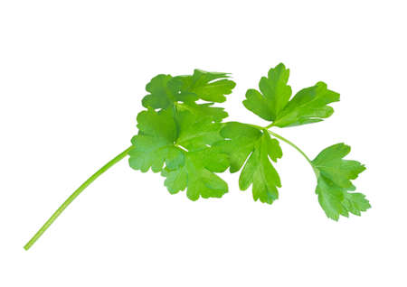 Parsley leaves isolated on white  Stock Photo - 21319999