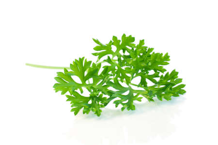 Parsley leaves isolated on white. Stock Photo - 21320034
