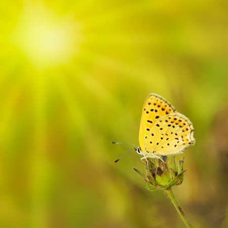 Summer green background with butterfly and sun. photo