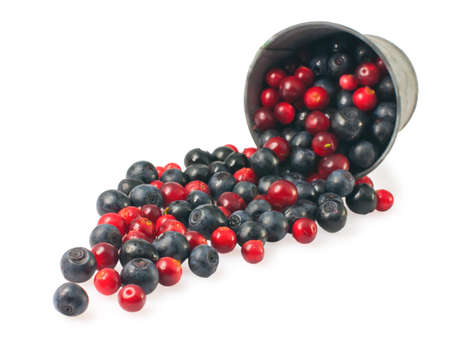 mountain cranberry: blueberries and cranberries isolated on white.
