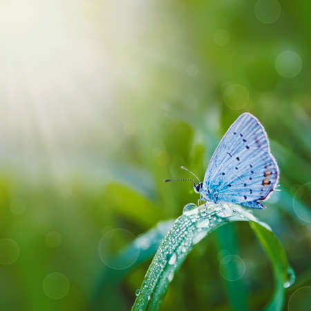 beautiful butterfly on a meadow in the sunlight  Plants in dewdrops  summer season photo