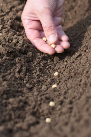 Spring sowing of seeds into the soil  Female hand with seeds on earth background closeup  photo