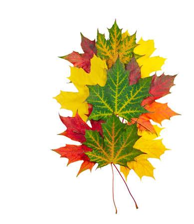 autumn maple leaves isolated on white background photo