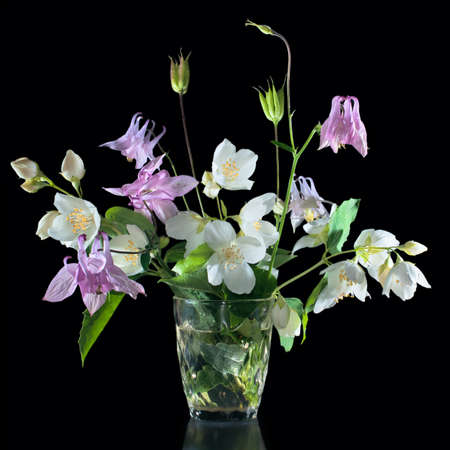 Bouquet of jasmine flowers and aquilegia isolated on black background photo