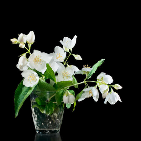 Bunch of jasmine flowers on a black background with reflection photo