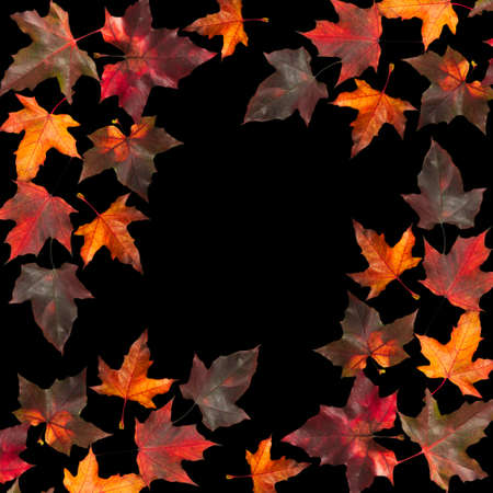Colorful maple leaves on black. Autumn background with space for text. photo