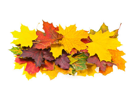 Bright autumn maple leaves on a white background photo