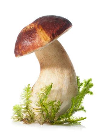 Boletus edulis on white background. Fresh white mushroom and moss