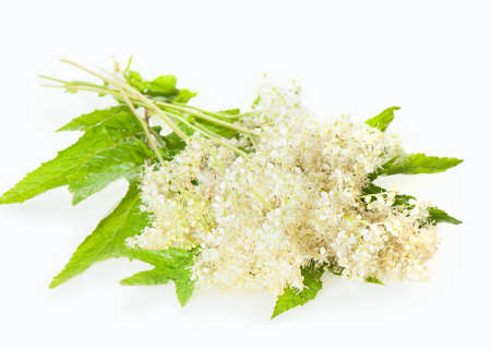 officinal: Meadowsweet flowers and leaves isolated on white Stock Photo