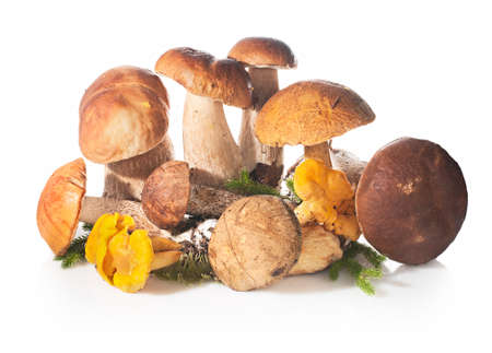 fungous: Fresh forest edible mushrooms on a white background.