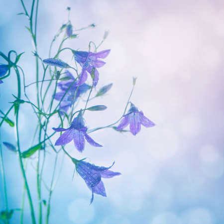 Beautiful spring background with campanula bouquet photo