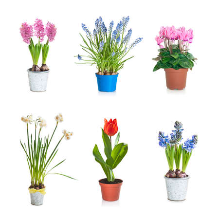 Collection set of Spring blooming plant in flower pot, isolated on white